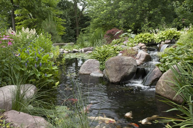 Designing Your Dream Pond 1