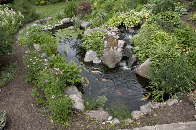 Designing Your Dream Pond 2