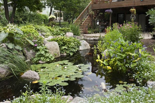 Designing Your Dream Pond 3