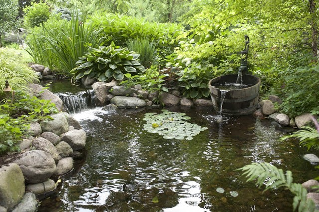 Designing Your Dream Pond 4
