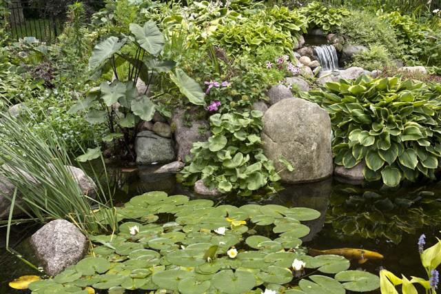 Designing Your Dream Pond 8