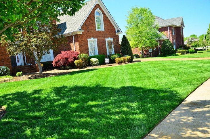 Basics of Lawn Maintenance