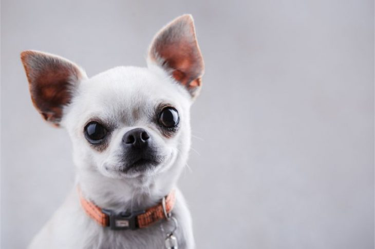 Dog Aggression Problems