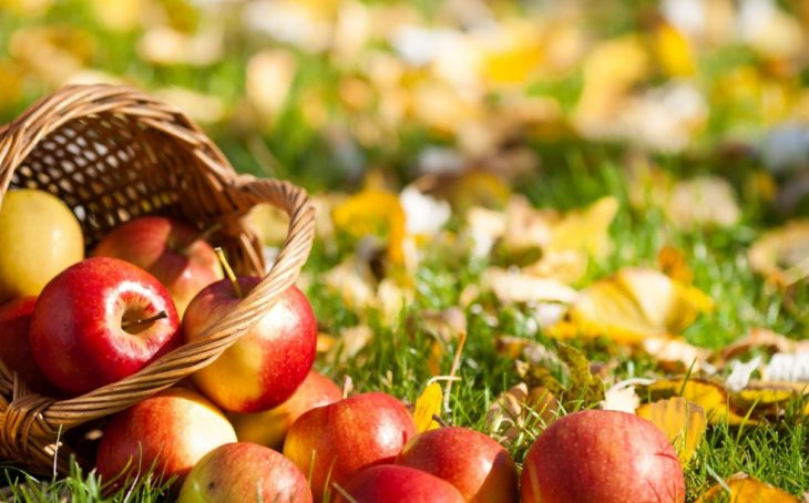Prepare Your Garden For Planting New Trees For An Orchard