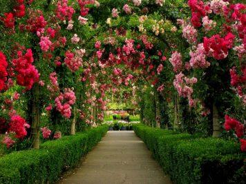 Create a Luxurious Garden