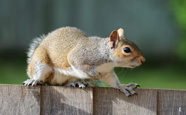 How to Keep Pests and Wildlife Out of the Garden