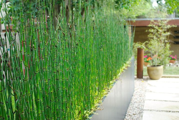 Small Front Yard Landscaping Ideas for Beginners