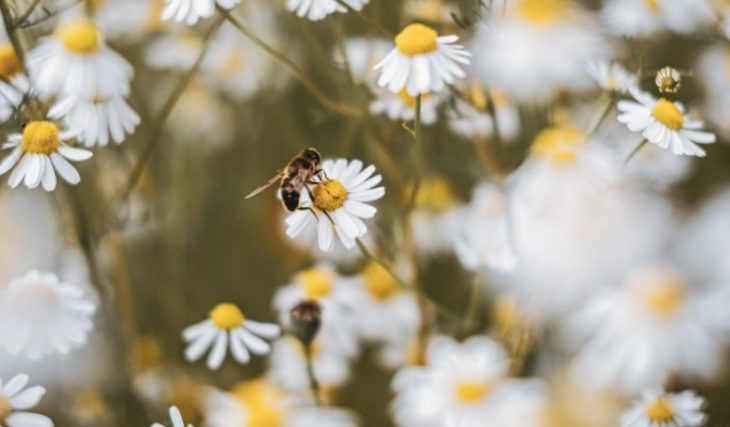 bees are important for garden