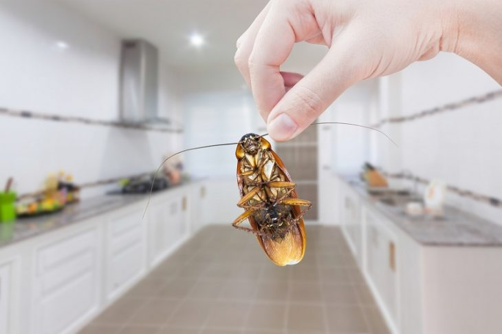 Tips To Deal With Household Pests