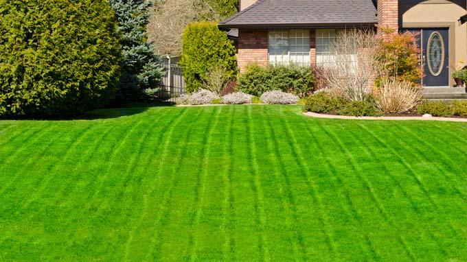 best fertilizer for your lawns
